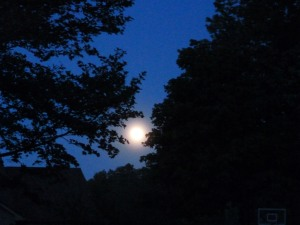 Moon above trees