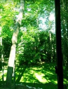 Window view of woods