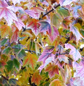 Silent Leaves