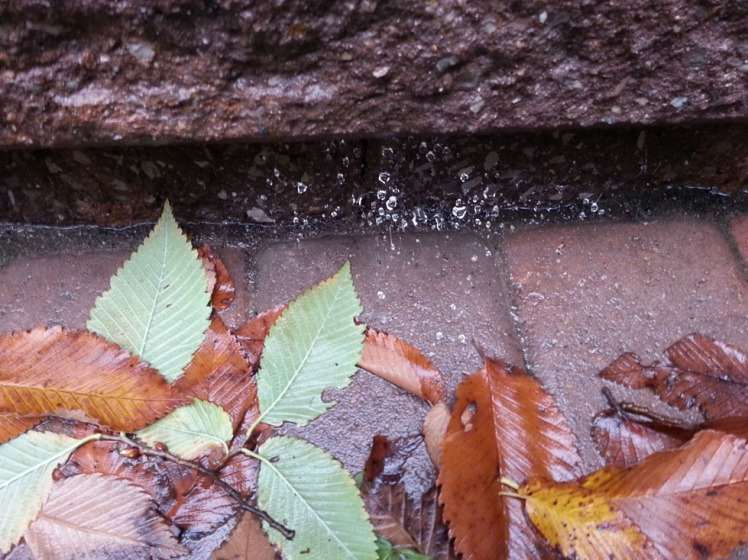 autumn-web-in-rain