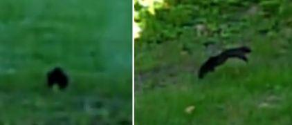 squirrel-jump