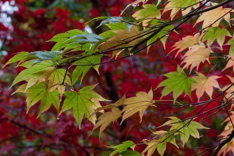 raindrops-on-autumn-leaves