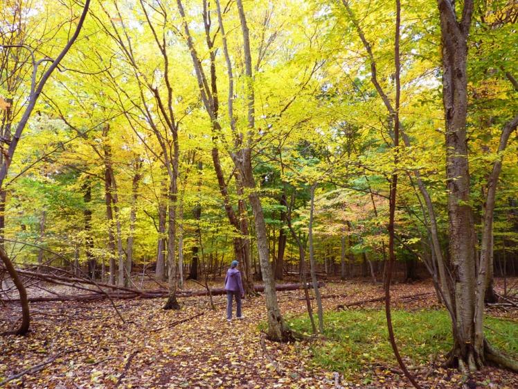 walk-in-autumn-woods