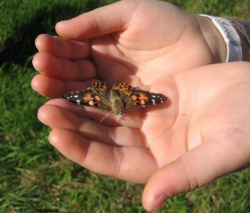 butterfly-in-hands