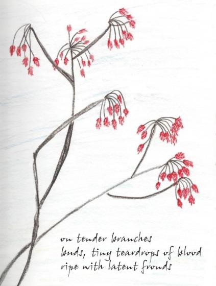 bud drawing