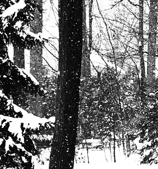 snowy day in black and white