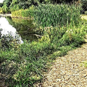 path around the lake