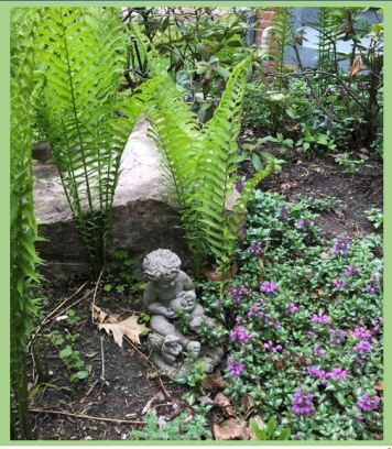 ferns and ground cover