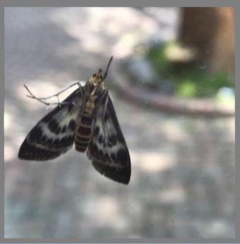 Moth on doorwall