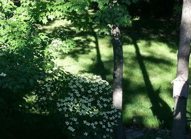 tree shadows in back yard