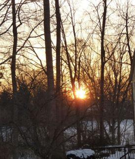 sunrise Crabapple2